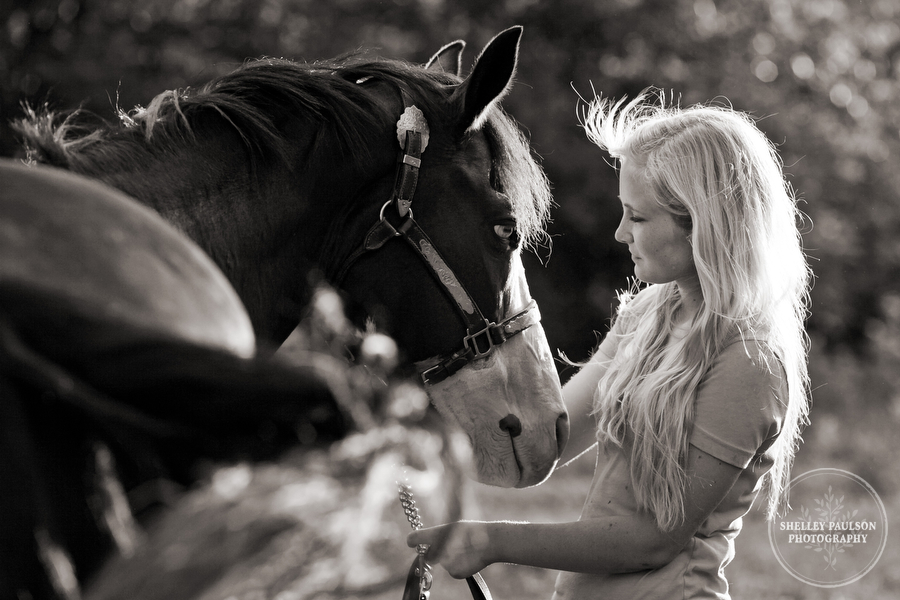 horse_portraits_allie_07.JPG