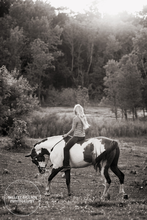 horse_portraits_allie_10.JPG