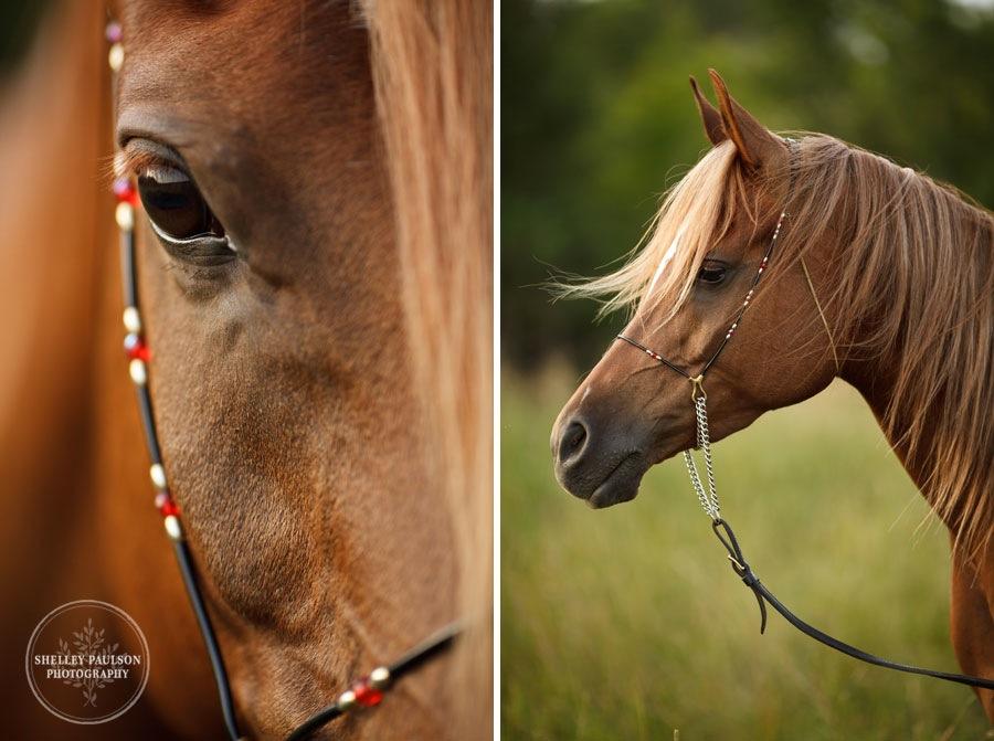 mn_senior_portraits_horse_10.JPG