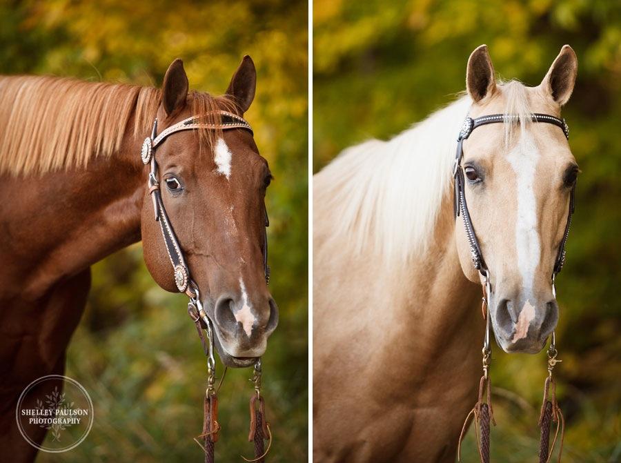 equine-family-portraits-09.JPG