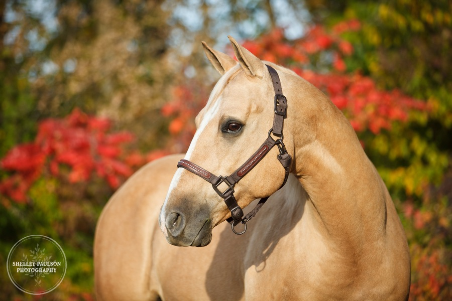 equine-family-portraits-15.JPG