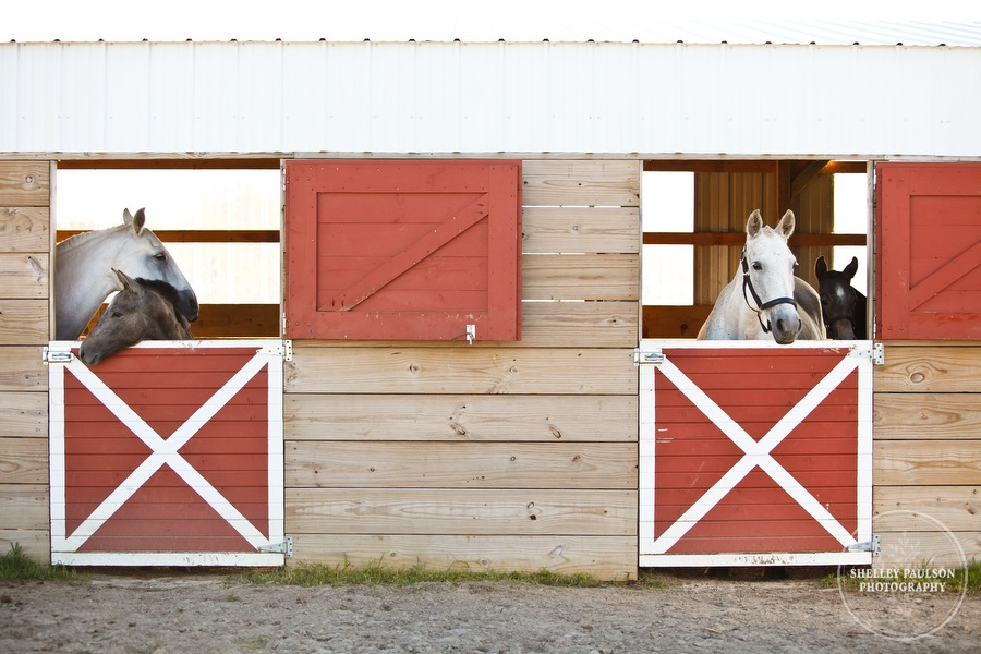 andalusian-horses-02.JPG