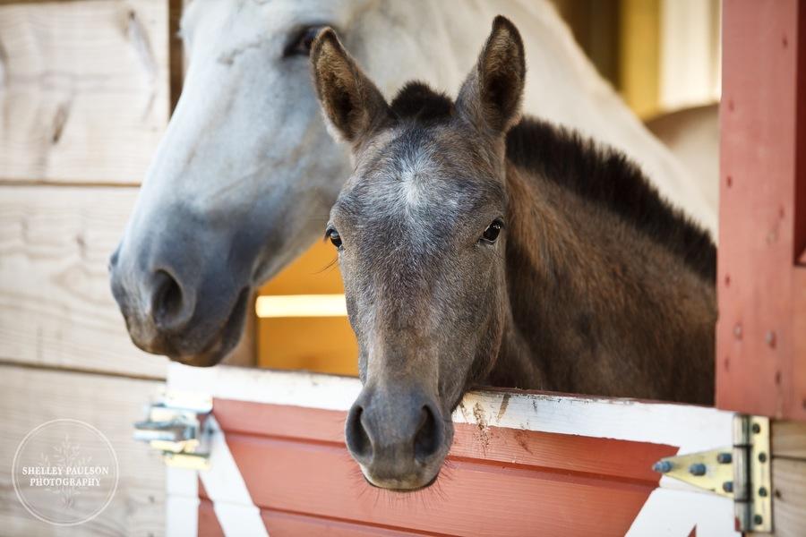 andalusian-horses-03.JPG