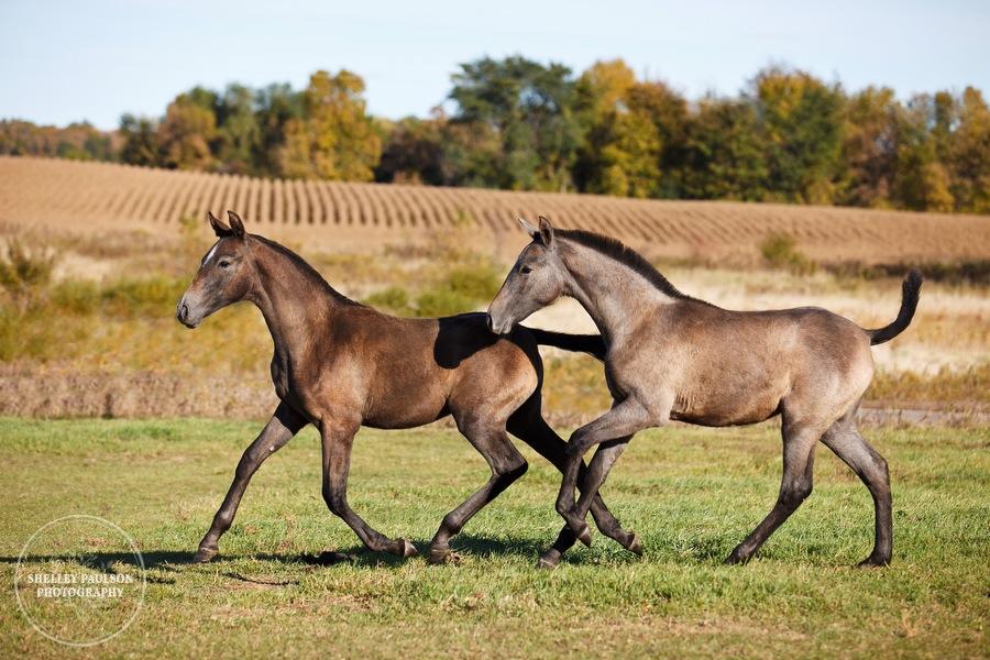 andalusian-horses-05.JPG