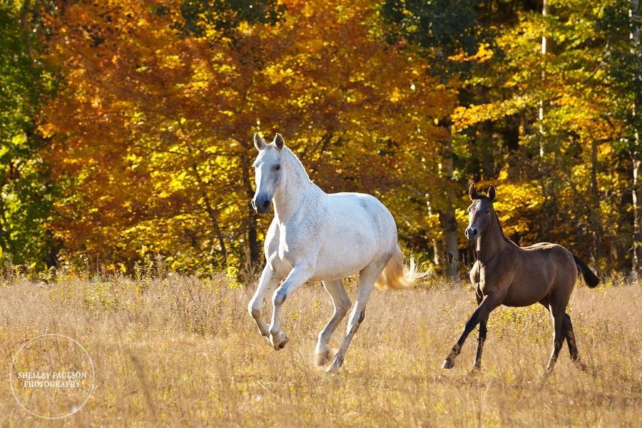 andalusian-horses-06.JPG