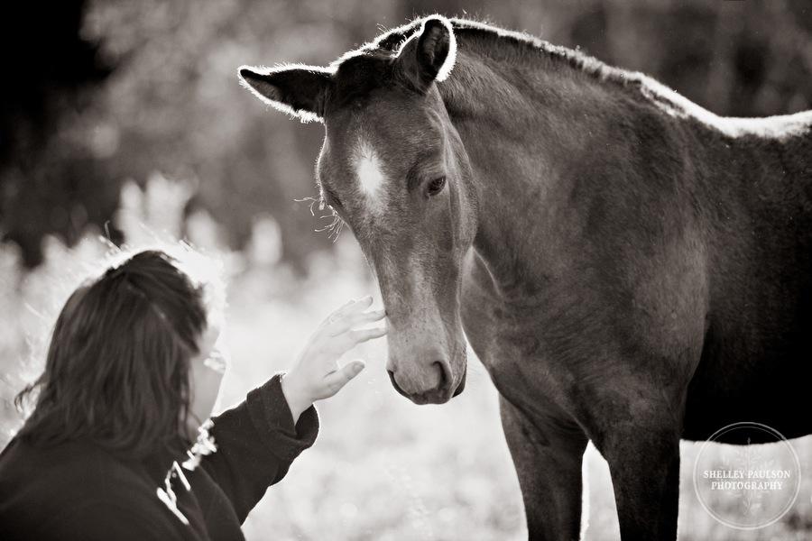 andalusian-horses-07.JPG