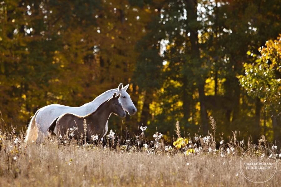 andalusian-horses-08.JPG