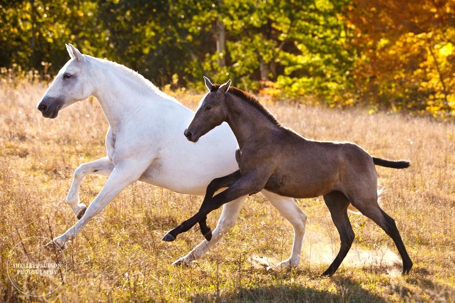 andalusian-horses-10.JPG