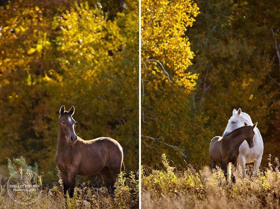 andalusian-horses-11.JPG