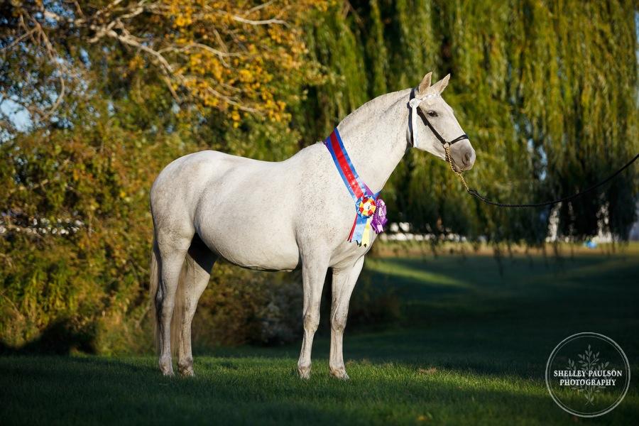 andalusian-horses-12.JPG