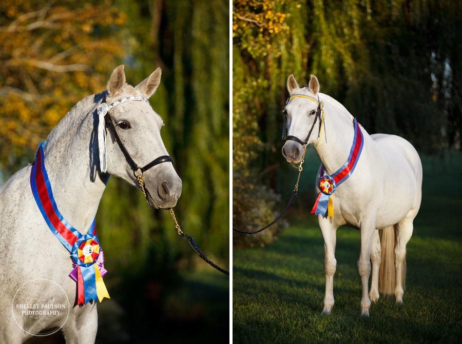 andalusian-horses-13.JPG