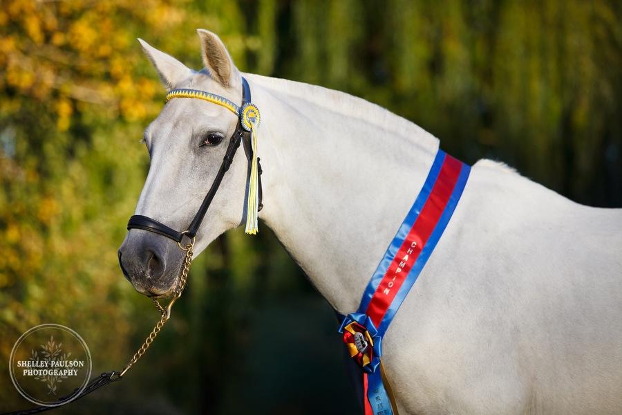 andalusian-horses-14.JPG