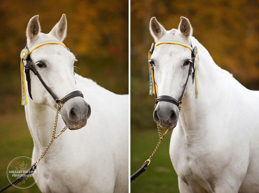 andalusian-horses-15.JPG