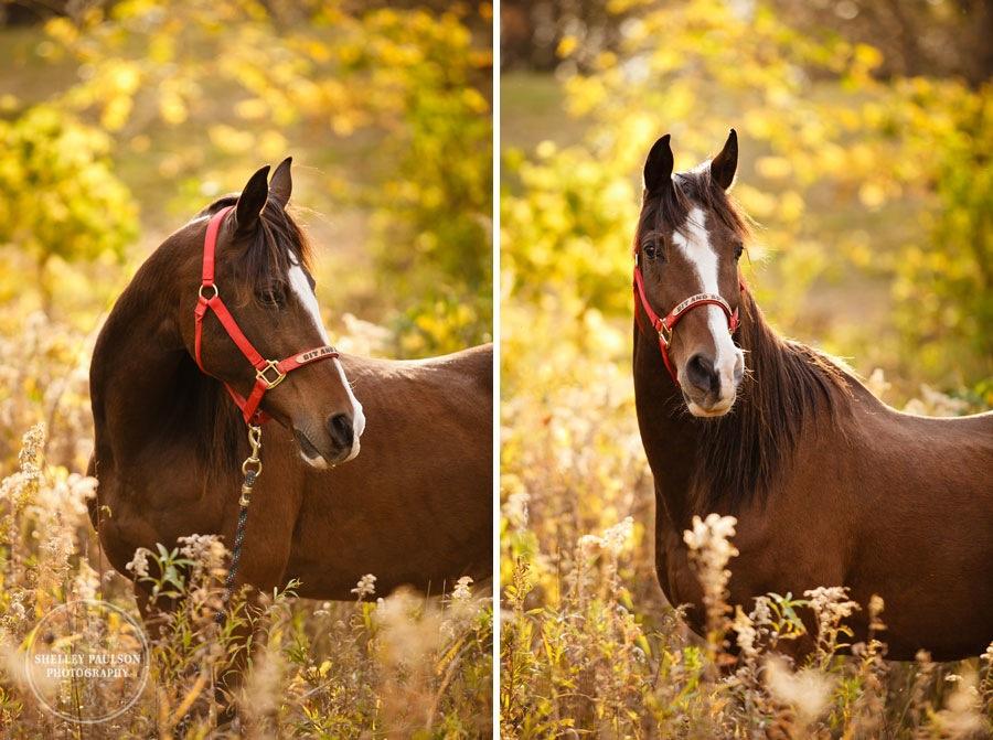 equestrian-portraits-02.JPG