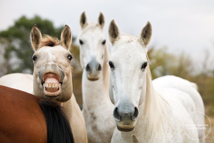 equestrian-portraits-12.JPG