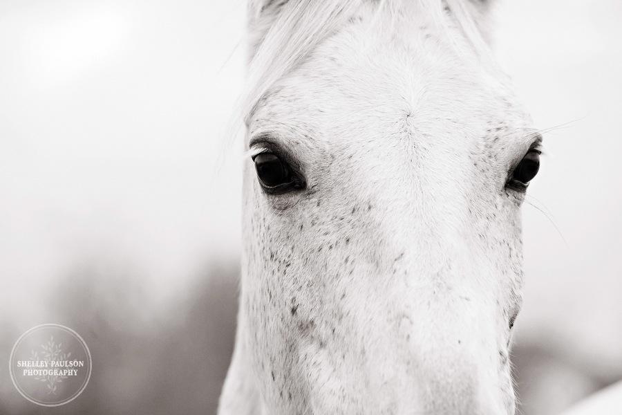 equestrian-portraits-13.JPG
