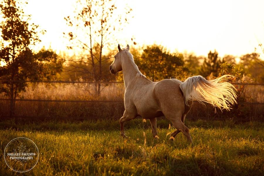 11-family-horse-portraits.JPG