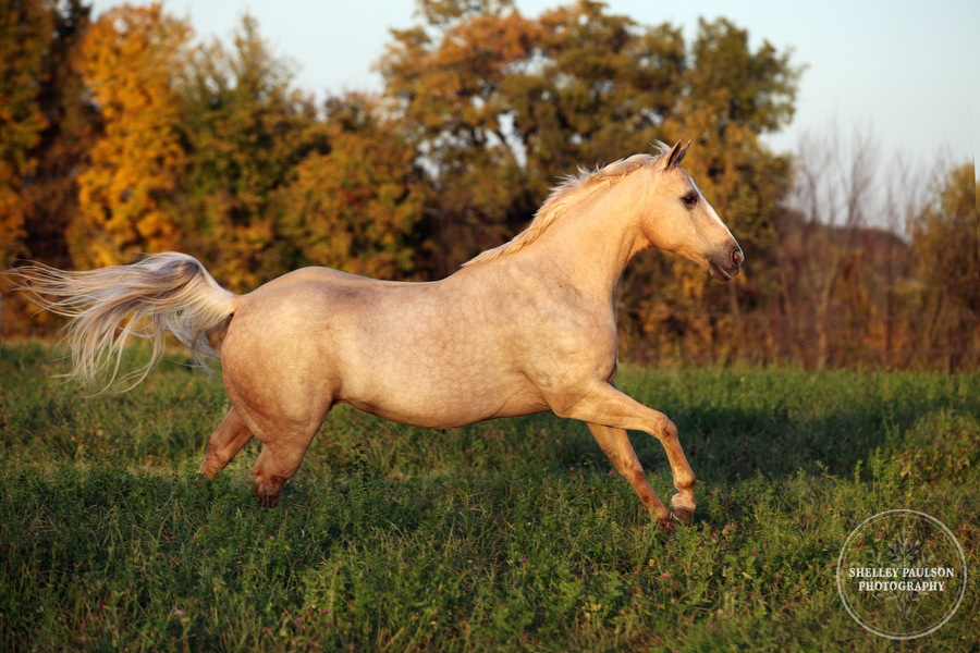 12-family-horse-portraits.JPG