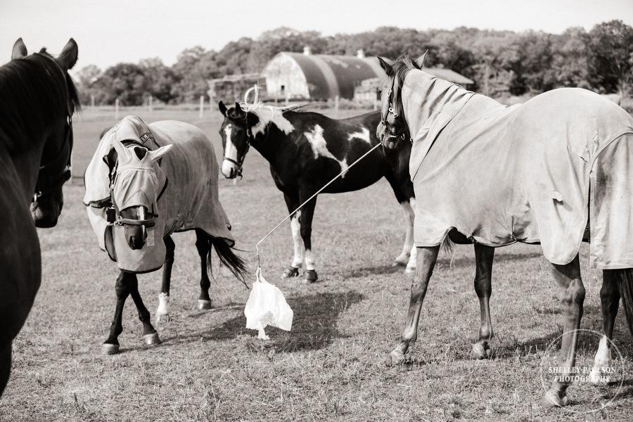 minnesota-horse-photographer-20.JPG