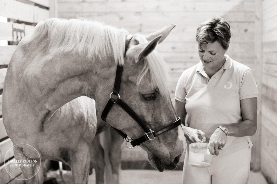 minnesota-horse-photographer-21.JPG