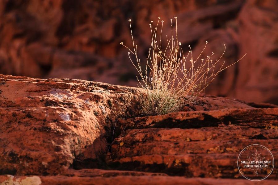 antelope-canyon-photos-23.JPG