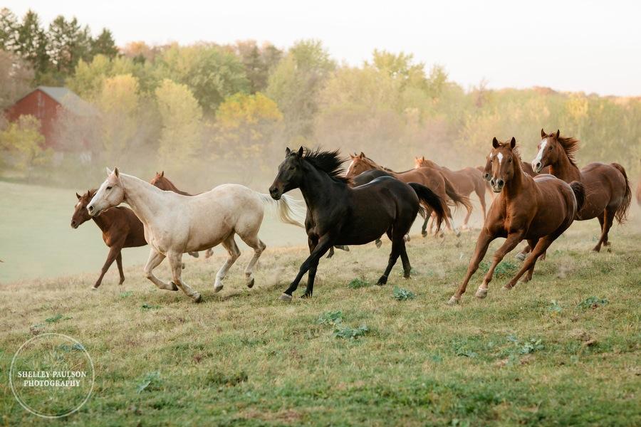 engagement-horses-minnesota-13.JPG