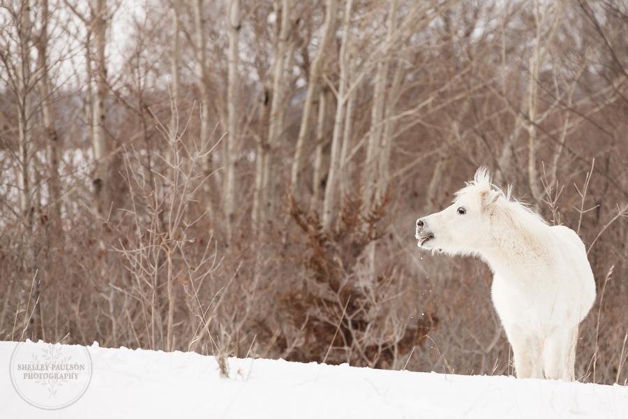 winter_equine_stock_photos-02.JPG
