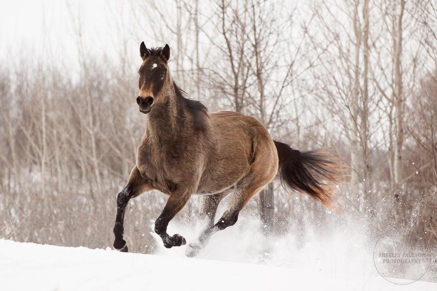 winter_equine_stock_photos-03.JPG