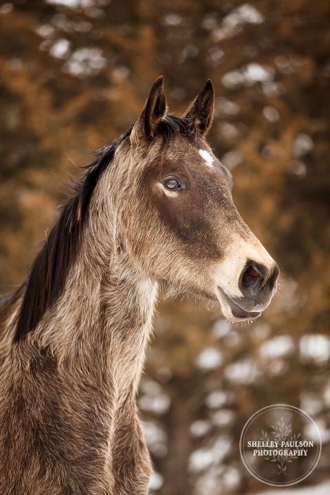 winter_equine_stock_photos-04.JPG
