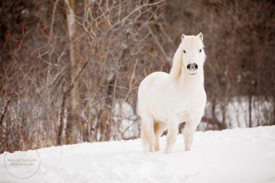winter_equine_stock_photos-07.JPG