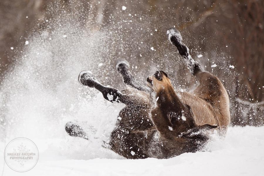 winter_equine_stock_photos-08.JPG