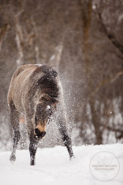 winter_equine_stock_photos-09.JPG