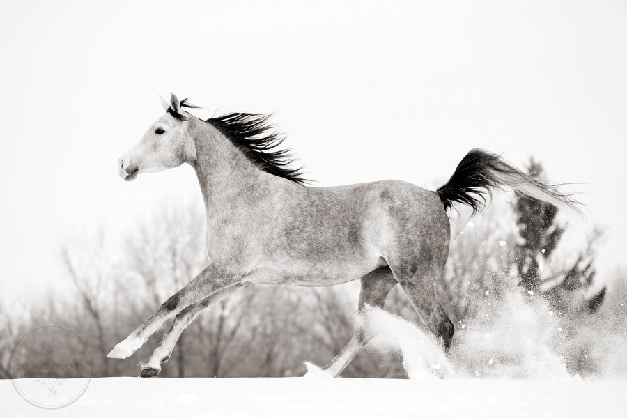 winter_equine_stock_photos-10.JPG