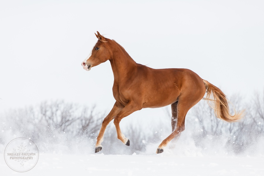 winter_equine_stock_photos-11.JPG