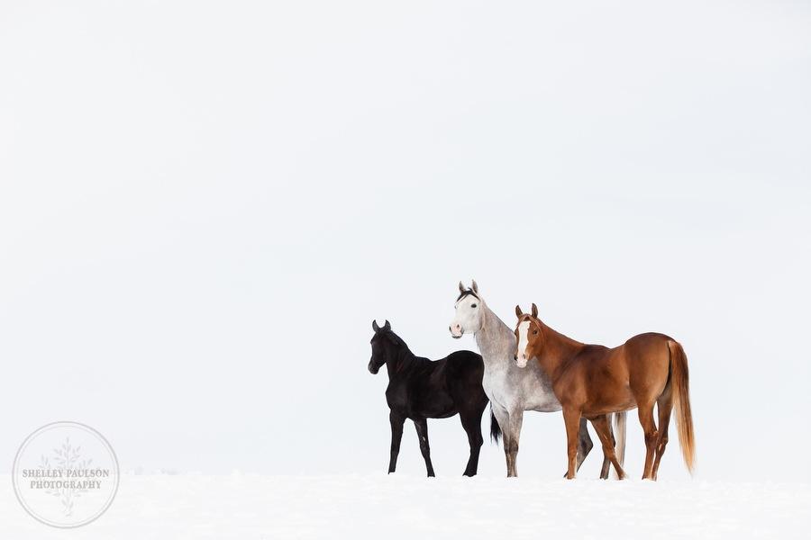 winter_equine_stock_photos-13.JPG
