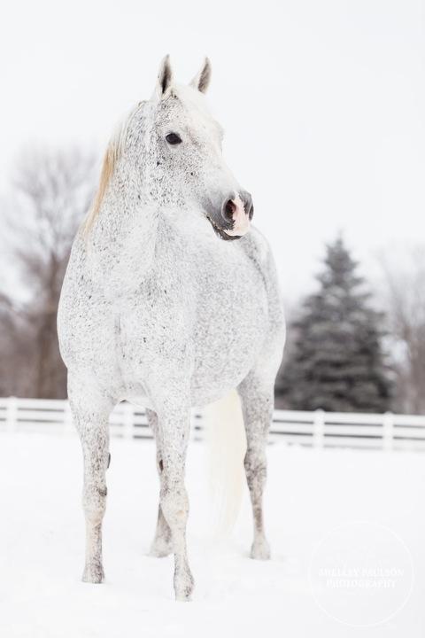 winter_equine_stock_photos-15.JPG