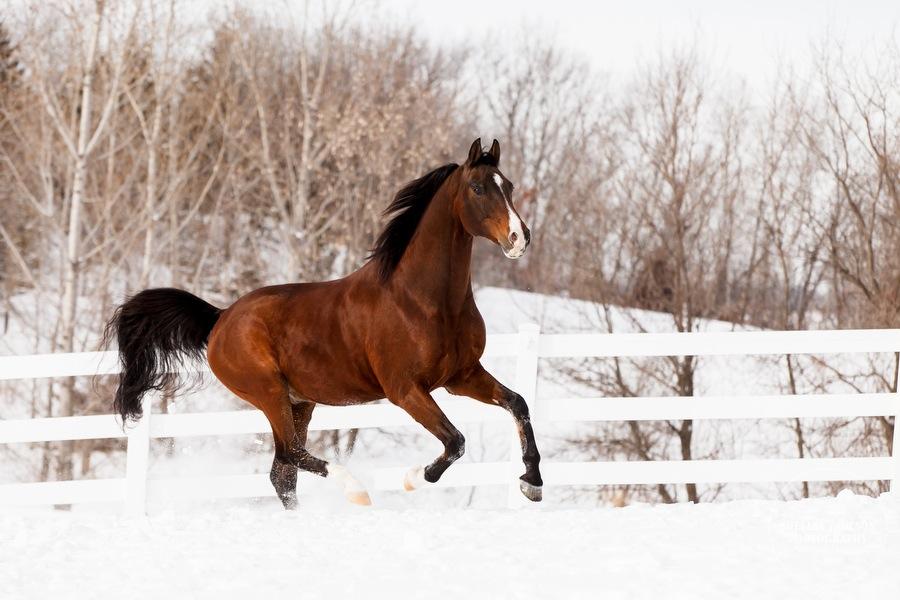 winter_equine_stock_photos-16.JPG
