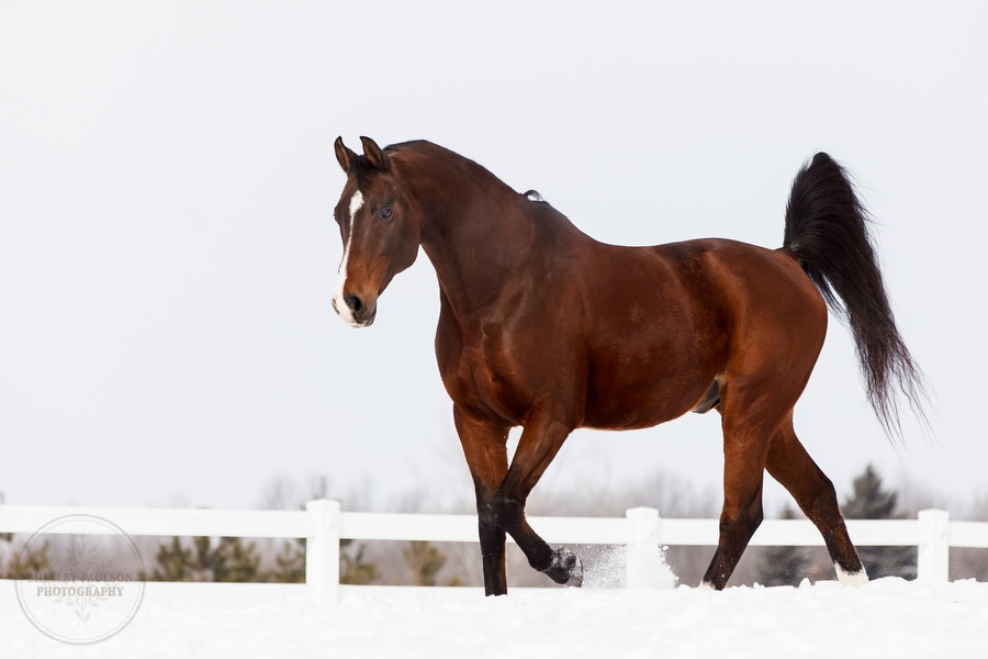 winter_equine_stock_photos-17.JPG