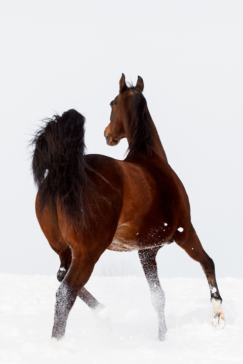 winter_equine_stock_photos-18.JPG