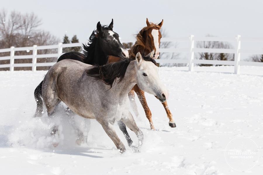 winter_equine_stock_photos-20.JPG