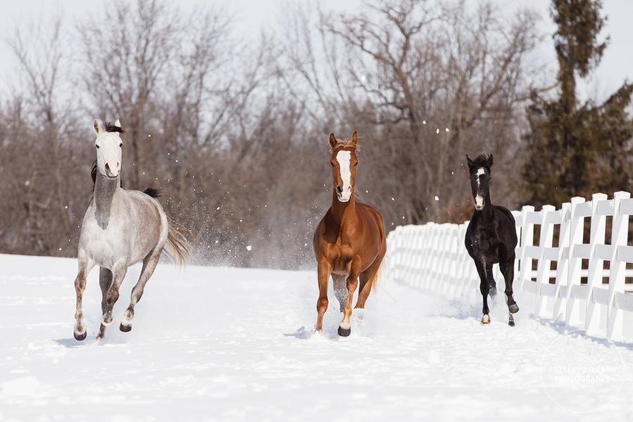 winter_equine_stock_photos-21.JPG