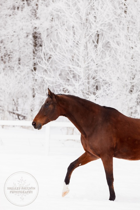 winter_equine_stock_photos-22.JPG