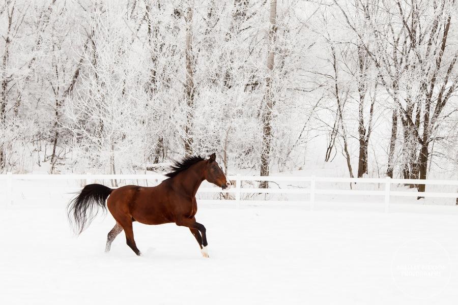 winter_equine_stock_photos-23.JPG