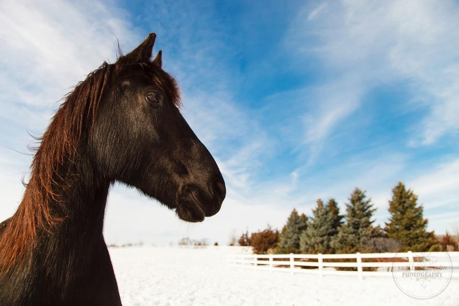 winter_equine_stock_photos-25.JPG