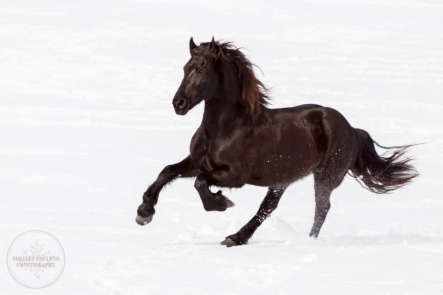 winter_equine_stock_photos-26.JPG