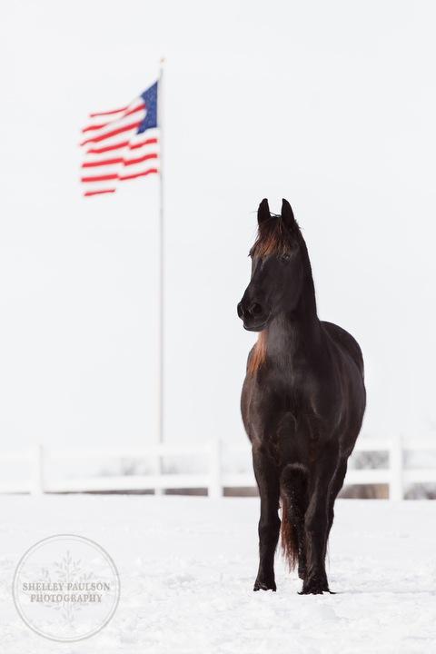 winter_equine_stock_photos-28.JPG