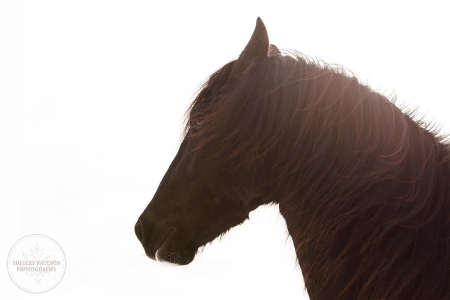 winter_equine_stock_photos-29.JPG
