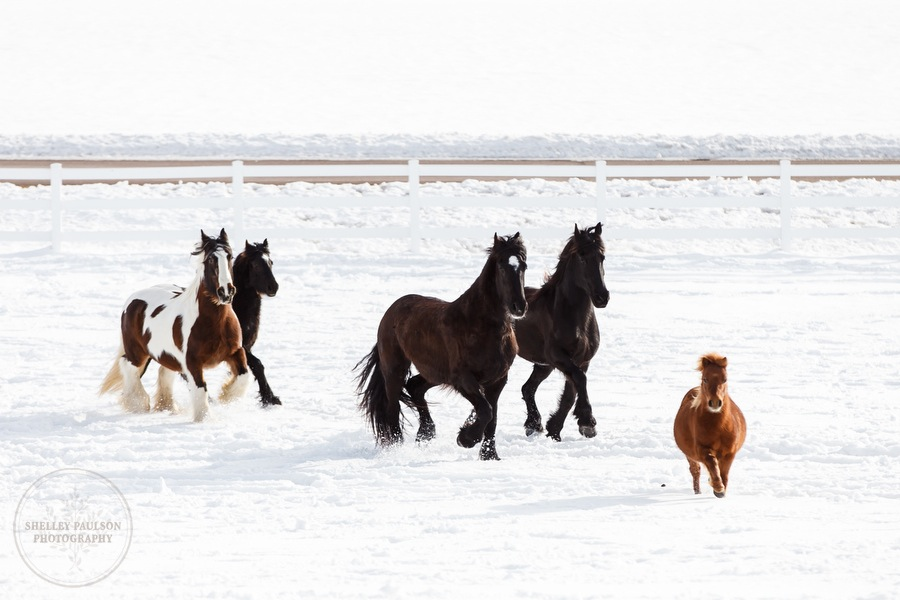 winter_equine_stock_photos-35.JPG