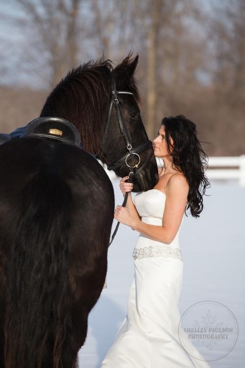 winter_equine_stock_photos-37.JPG