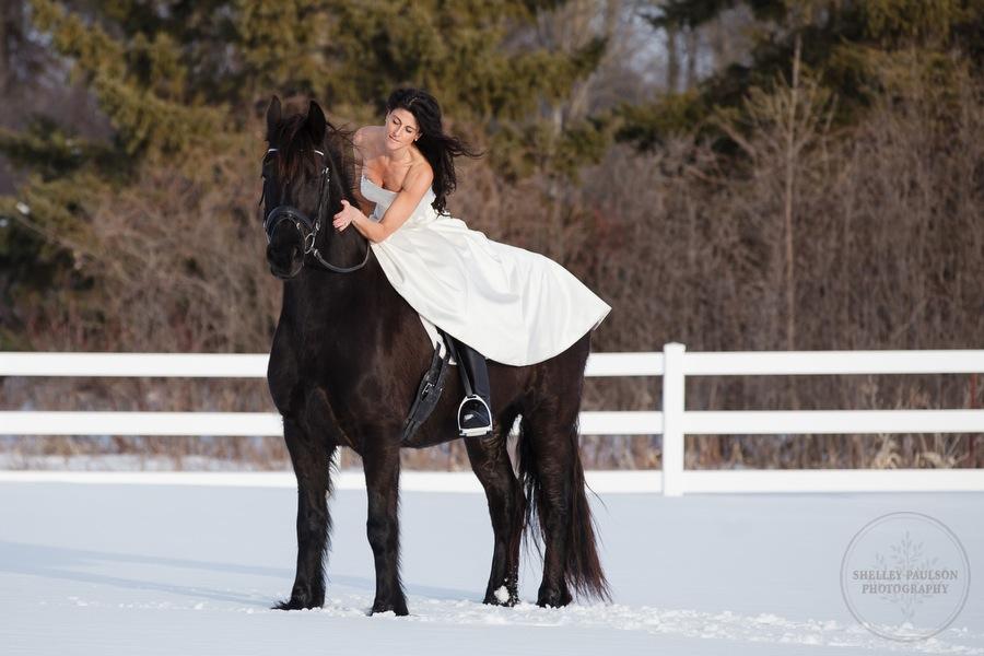 winter_equine_stock_photos-38.JPG